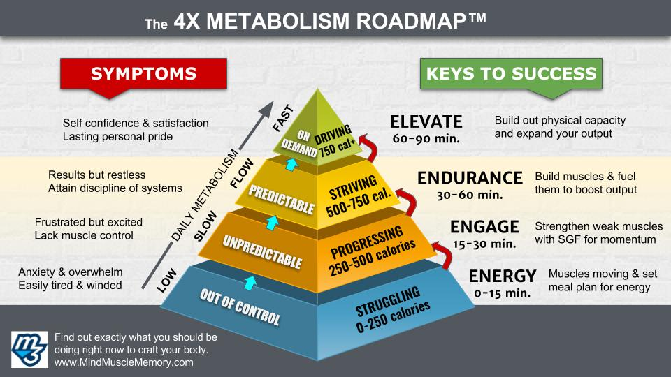4x metabolism nutrition mind muscle memory pyramid roadmap