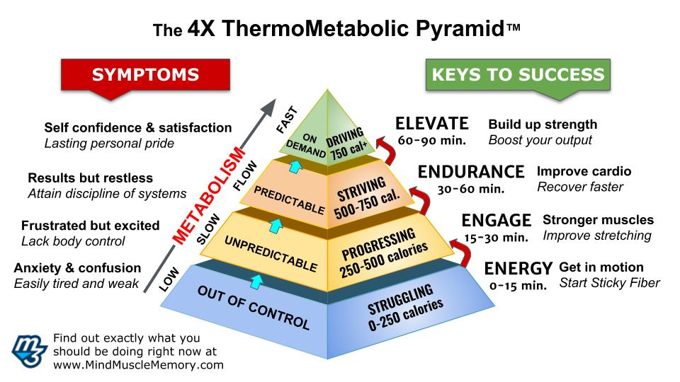 4x thermometabolic pyramid v3.4 Online Nutrition and Strength Courses