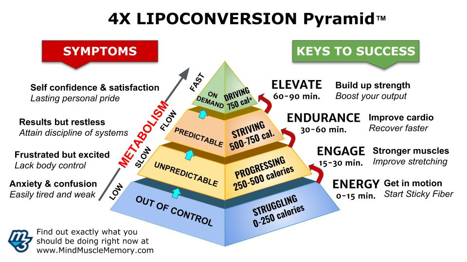 4x Lipoconversion pyramid nutrition strength for mind muscle memory