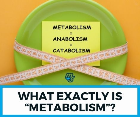 """What exactly is """"metabolism"""""""